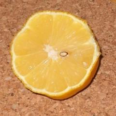medium_Appelm. citroen.jpg