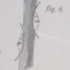 medium_fig. 6.jpg